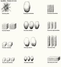Kartoffeln_01